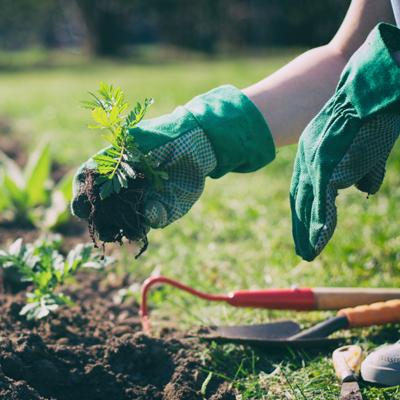 Image: Garden shrubs